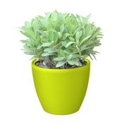G21 Samozavlažovací květináč Ring mini zelený 15cm
