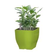 G21 Samozavlažovací květináč Cube mini zelený 13.5cm