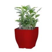 G21 Samozavlažovací květináč Cube mini červený 13.5cm